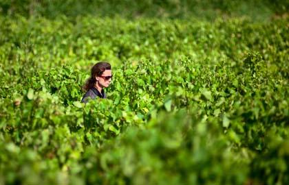 Les Gentillères Languedoc Olivier Toussaint Laure Gasparotto dans les Vignes pour Lindaboie.jpg